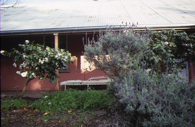 1 burswood portland rear view courtyard garden