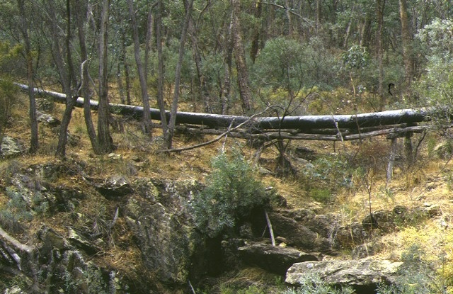 1 red hill hydraulic gold sluicing site castlemaine pipe line side view