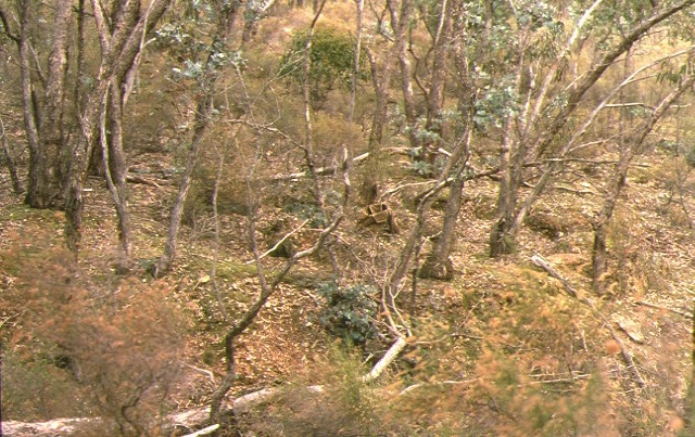 1 cobblers gully gold puddling site old coach road castlemaine landscape