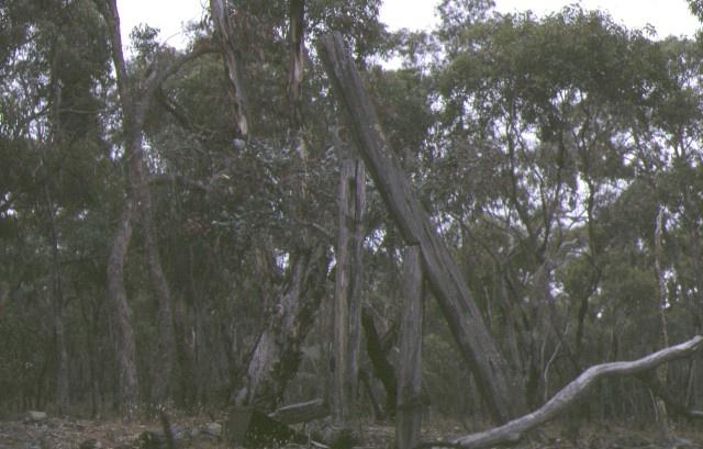 1 lloyds whip gold mining site stuart mill historic site st arnaud landscape