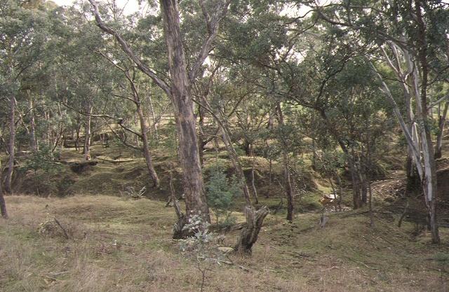 1 new nuggetty gully alluvial gold workings yandoit creek werona road yandoti earth works