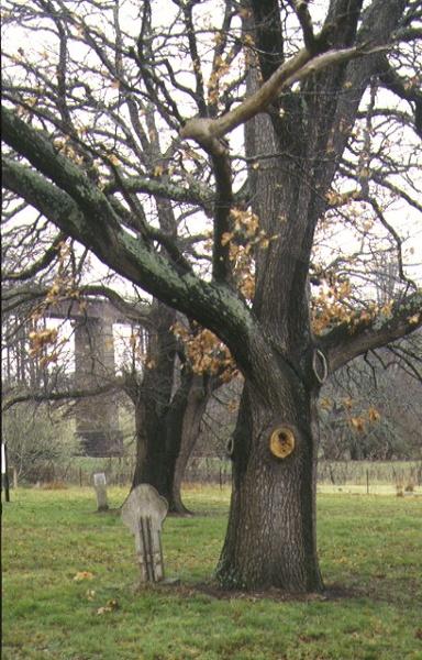1 royal oaks taradale public park taradlae park view