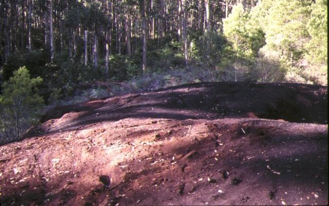 1 comet mill mount disappointment sawdust heap jun1998