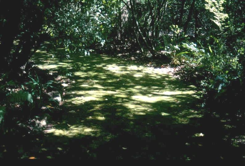 h02053 h2053 bv glencairn moss lawn nov 2002