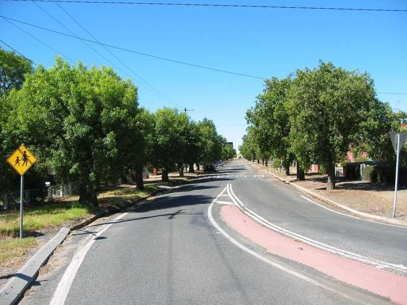 h02061 1 kurrajong trees comyn street 02 2004