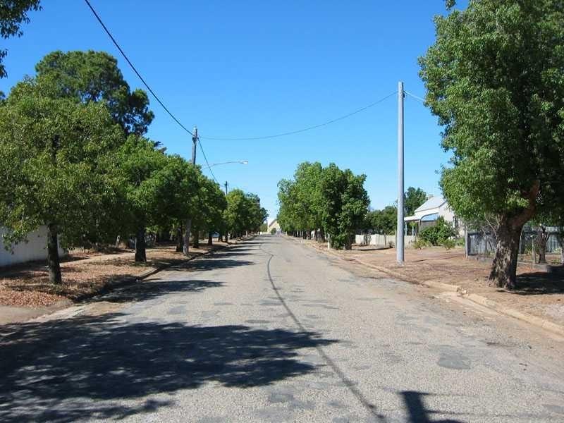 h02061 kurrajong trees comyn street 01 2004