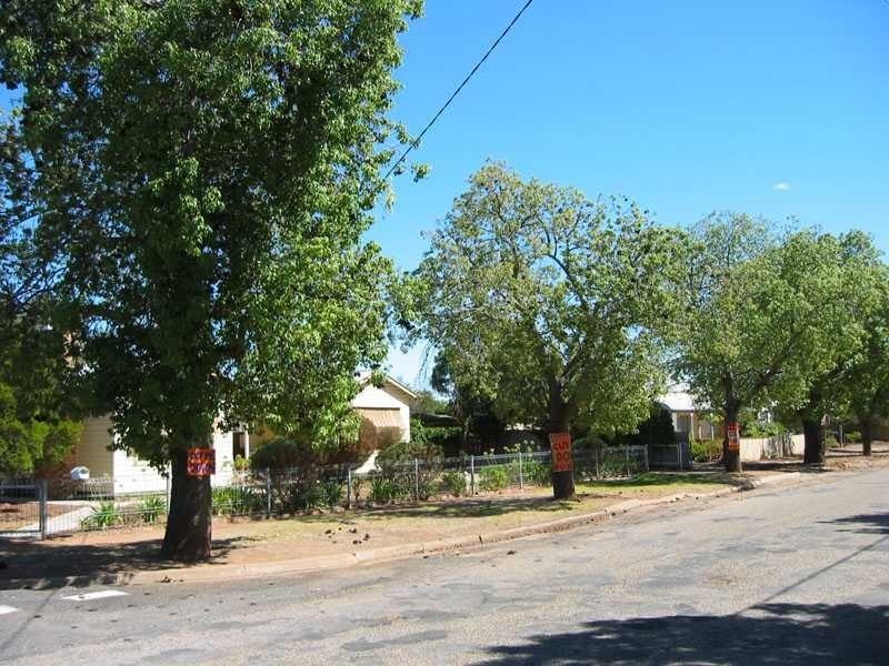 h02061 kurrajong trees comyn street sign 02 2004