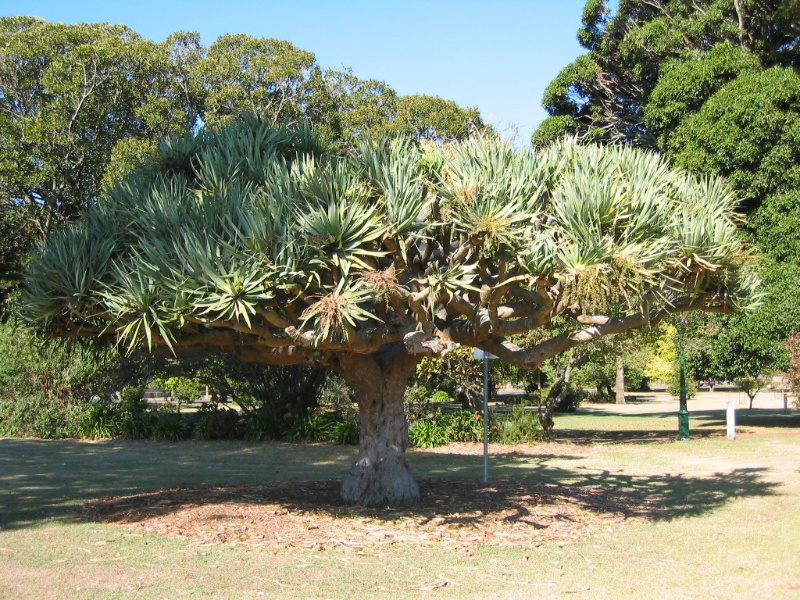 H0118 Koroit Botanic Gardens 11