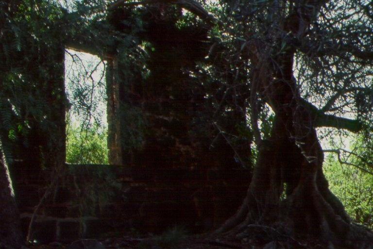 Rockbank Olive Tree
