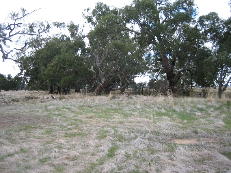 2063 Colbinabbin Homestead Site of Former Woolscour June 2006 mz