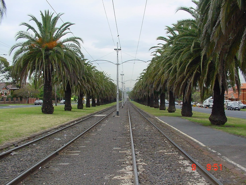 Canary Island Date Palm Avenue Mount Alexander Road Essendon June 2003
