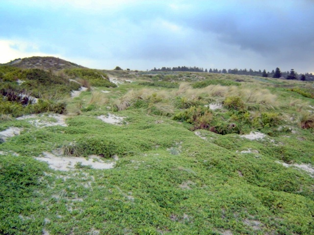 H1659 griffith island port fairy landscape2