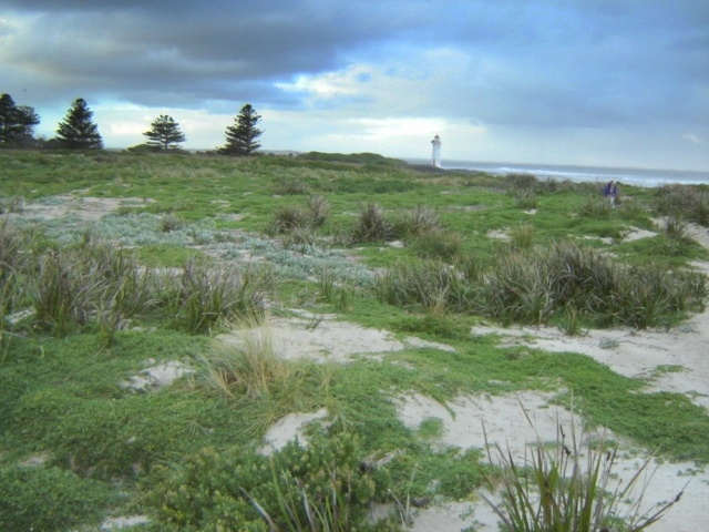 H1659 griffith island port fairy landscape3