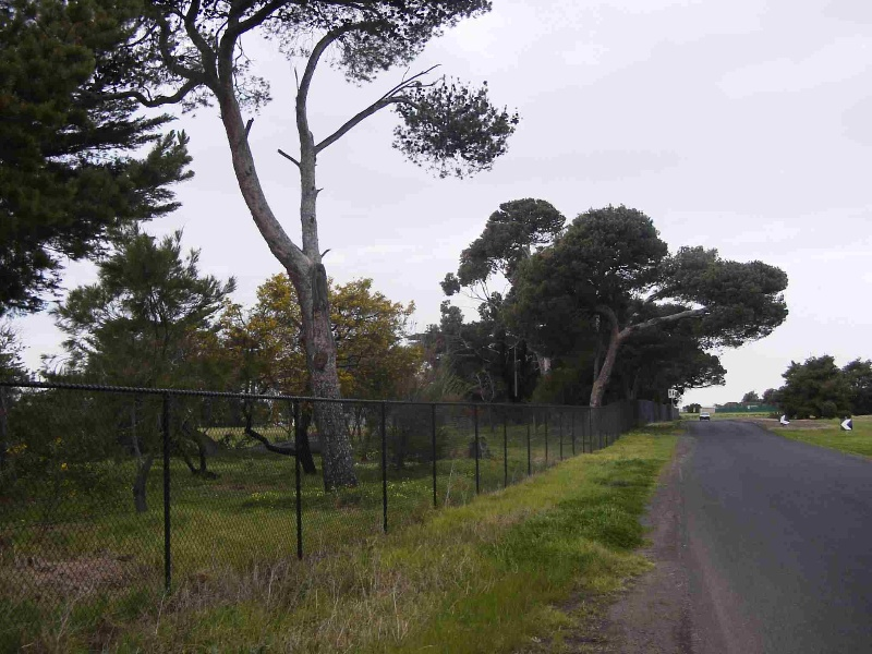 'The Pines' Scout Camp, Hobsons Bay Heritage Study 2006 - The image below shows the Aleppo and Stone pines along the Atlona Road frontage.