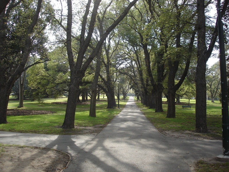 fawkner park avenue of trees2 apr07 jmb