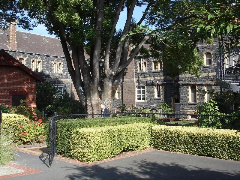 Rear courtyard & camphor laurel tree