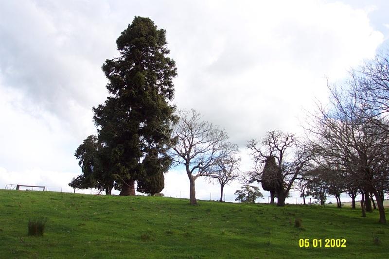 23117 Park Hill Yulecart original site 1369