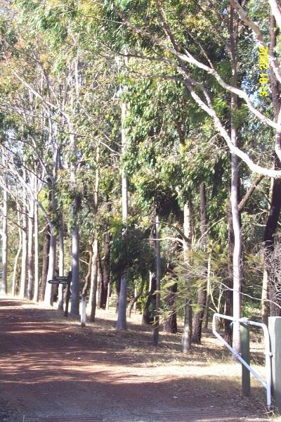 23070 Peter Francis Arboretum Coleraine 0464