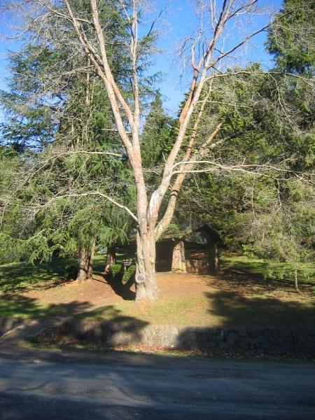 Emerald Lake Park Landscape Part Nobelius Nursery
