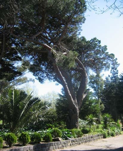 Jesmond Dene House, Trees