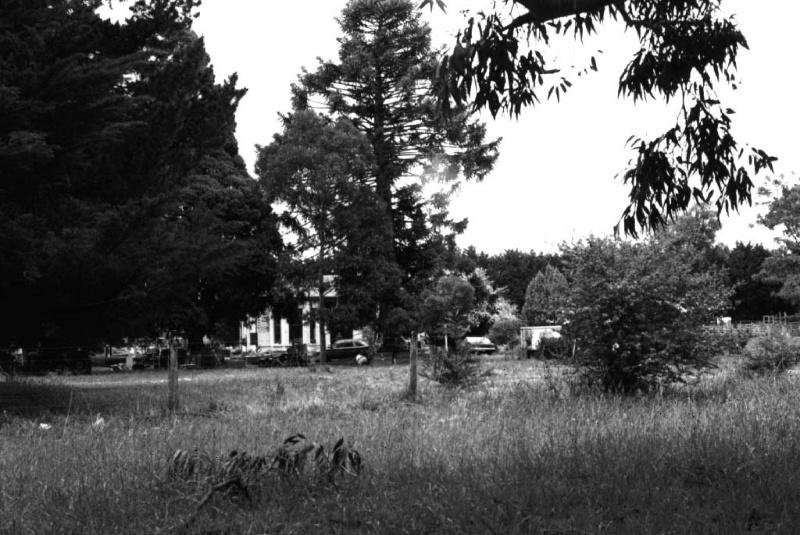 Primrose Park - Bunya Bunyas & Trees