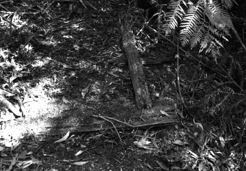 Timber Tracks