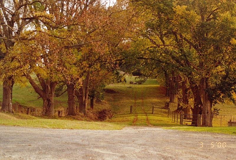 Kardella Avenue of Honour (2000)