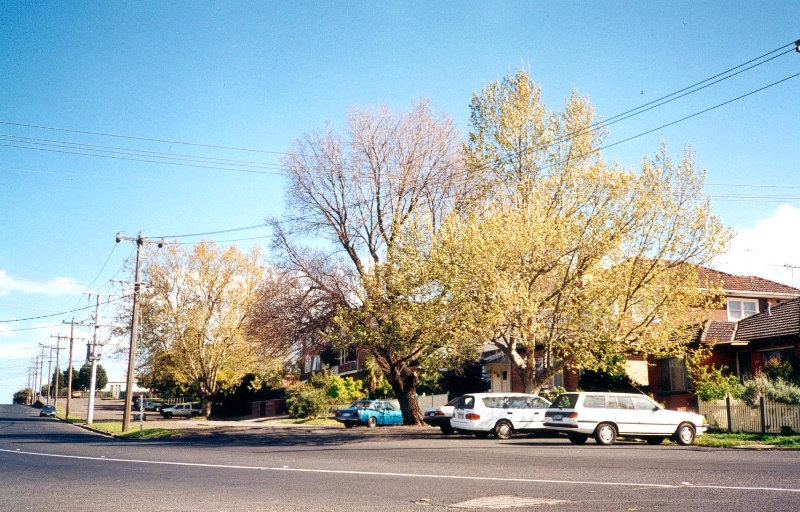 29427 Nicholson St 286 94 trees