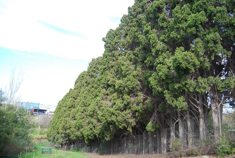 2976 Tay Creggan 30 Yarra Street Hawthorn Border Plantings 31