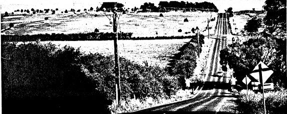 1 - Hawthorn Hedges in Kangaroo Ground - Shire of Eltham Heritage Study 1992