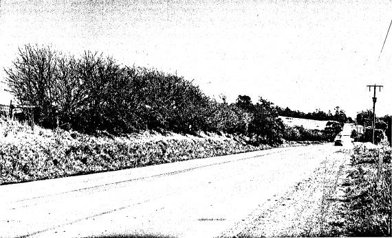 61 - Hawthorn Hedges near Wellers Pub Kangaroo Ground - Shire of Eltham Heritage Study 1992