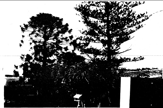65 - Kangaroo Ground General Store Post Office Pines_06 - Shire of Eltham Heritage Study 1992