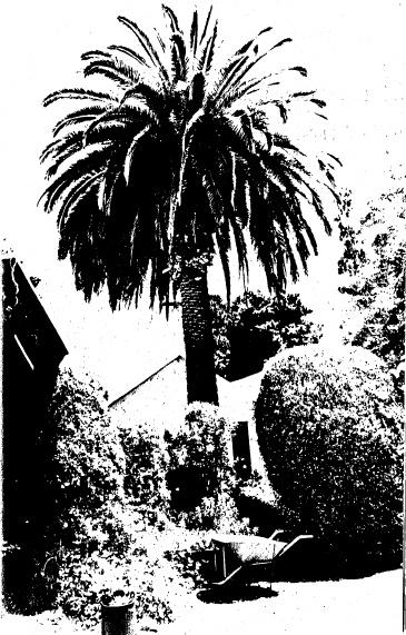 69 - Garden Hill Shearing Shed Elth Yarra Glen Rd_10 - Shire of Eltham Heritage Study 1992