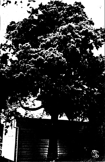 69 - Garden Hill Shearing Shed Elth Yarra Glen Rd_11 - Shire of Eltham Heritage Study 1992