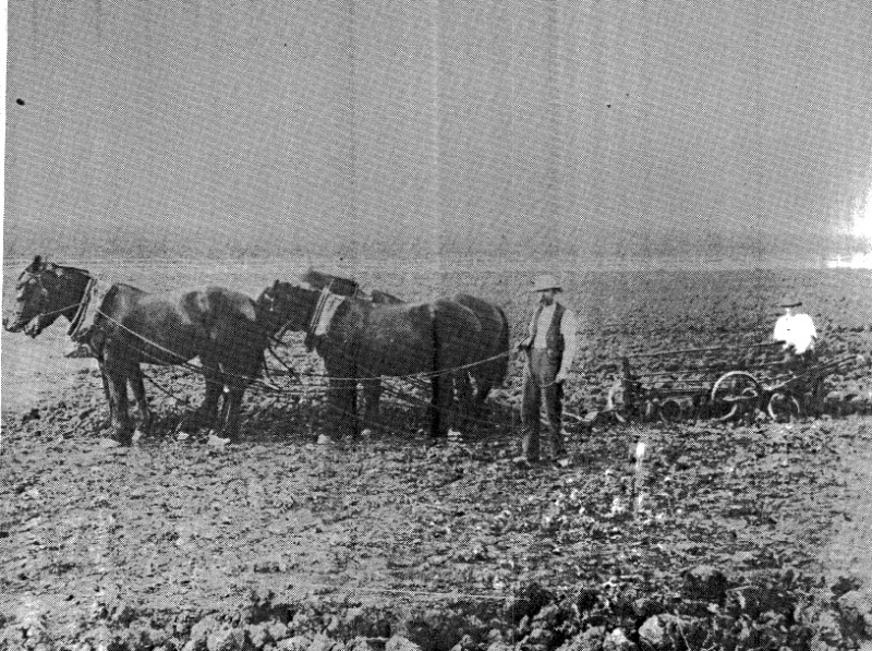69 - Garden Hill Shearing Shed Elth Yarra Glen Rd_13 - James and Robert Ness ploughing at Garden Hill (ELHPC NO. 420) - Shire of Eltham Heritage Study 1992