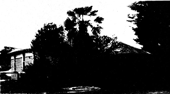 94 - Railways Residence Palm Cypress Trees Hurstbridge - Shire of Eltham Heritage Study 1992