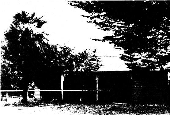 94 - Railways Residence Palm Cypress Trees Hurstbridge_04 - Shire of Eltham Heritage Study 1992