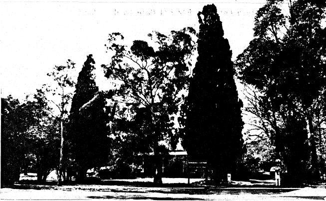 192 - Wingrove Cottage Pines 672 674 Main Rd 02 - Shire of Eltham Heritage Study 1992