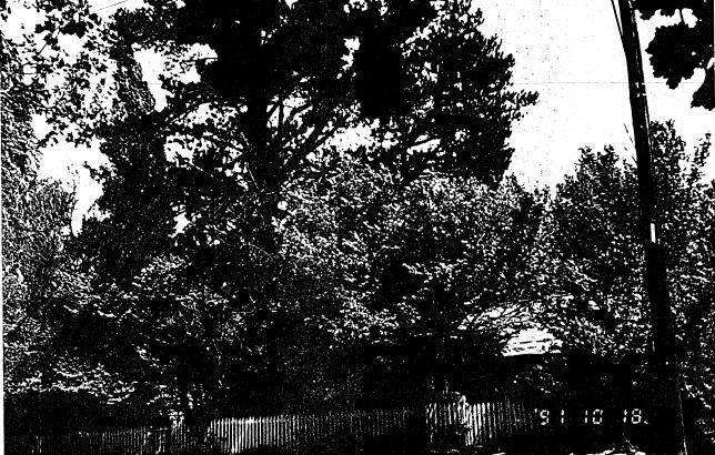 195 - Jarrold Cottage Shop Studio 701 Main Rd 02 - Shire of Eltham Heritage Study 1992