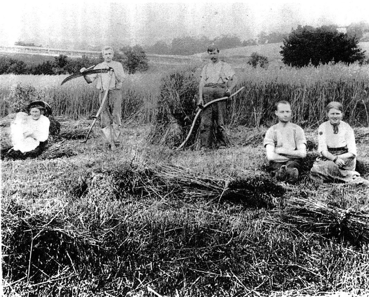 195 - Jarrold Cottage Shop Studio 701 Main Rd 07 - Cutting hay on the Jarrold property in main road ca.1910 (ELHPC NO.632) - Shire of Eltham Heritage Study 1992