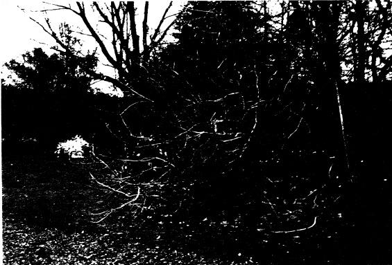 268 - Sweeneys Cottage Eltham 14 - Shire of Eltham Heritage Study 1992