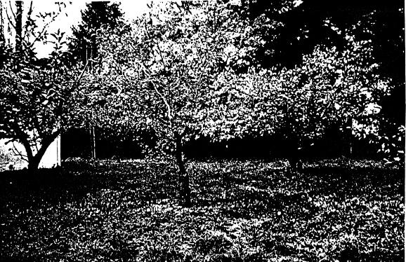 268 - Sweeneys Cottage Eltham 15 - Apple Orchard Trees - Shire of Eltham Heritage Study 1992