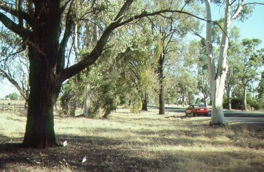 H01975 calder woodburn memorial avenue3 jh mar98