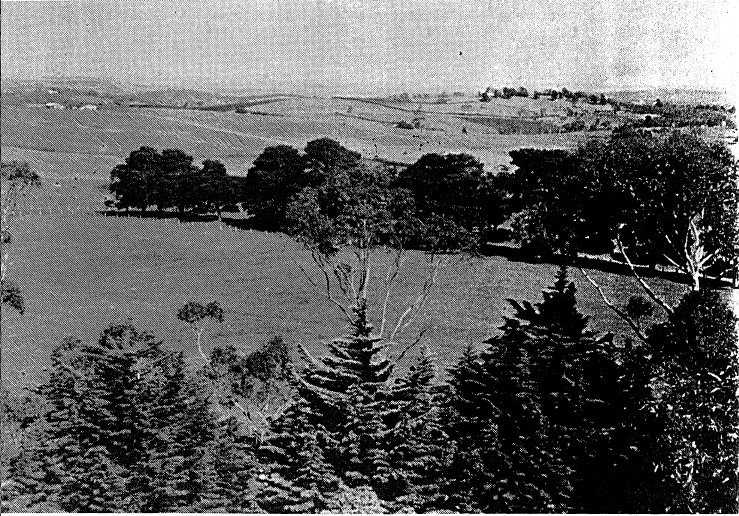 68 - War Memorial and Components Eltham Yarra Gl Rd_06 - View from the tower showing the tops of the trees planted aronud the site (not dated) ELHPC No.415 - Shire of Eltham Heritage Study 1992