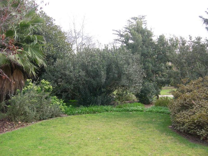 1772_Benalla_Botanic_gardens_2010_July_2_HV_0121.jpg