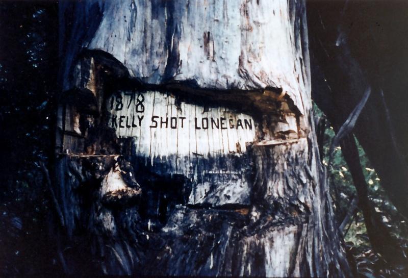 B2938 Near Tolmie Stringy Bark Creek Site