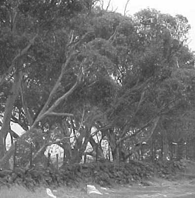 Site 030 - Mt Derrimut dry stone wall.jpg