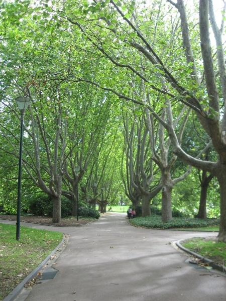 Domain Queen Vic gardens plane tree avenue.JPG