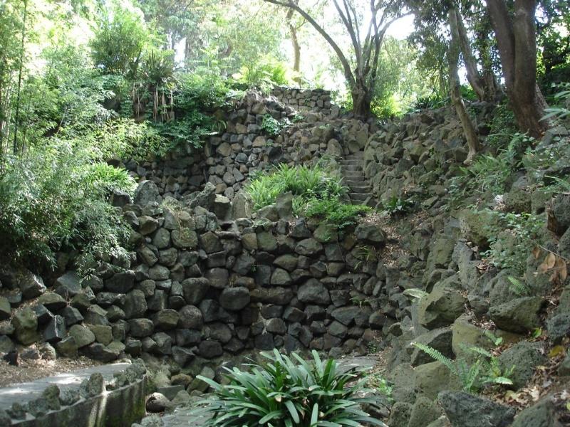Domain fern gully.JPG