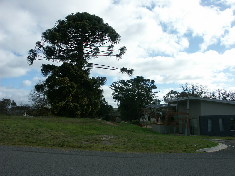 Mature Trees (formerly part of the Police Magistrate's Residential Garden)
